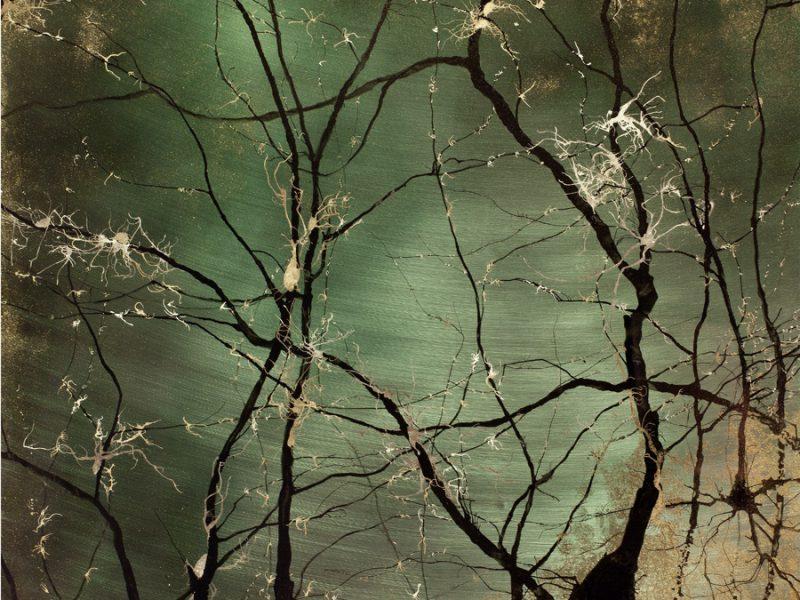 Neural-Migration