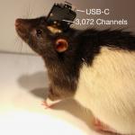 neuralink rat laboratoire