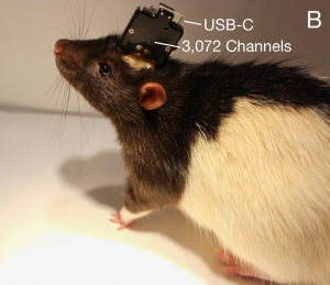 neuralink rat laboratoire